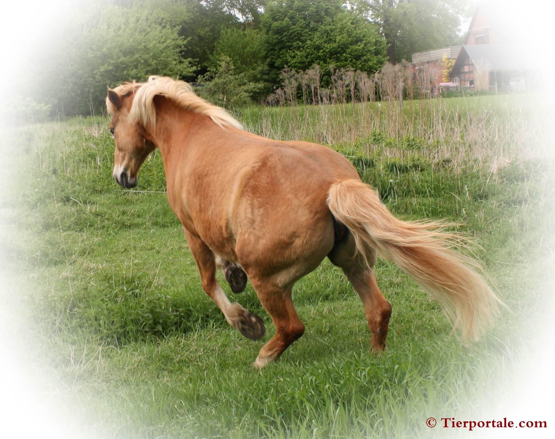 Pferde kaufen