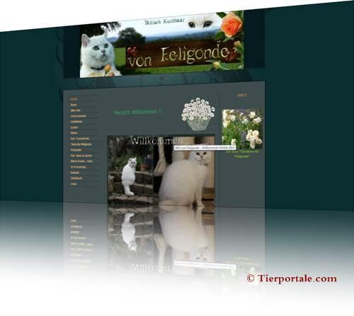 www.bkh-von-feligonde